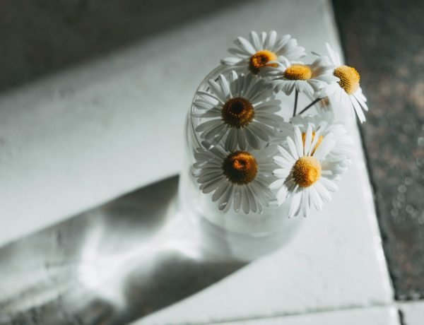 white daisies in clear glass vase